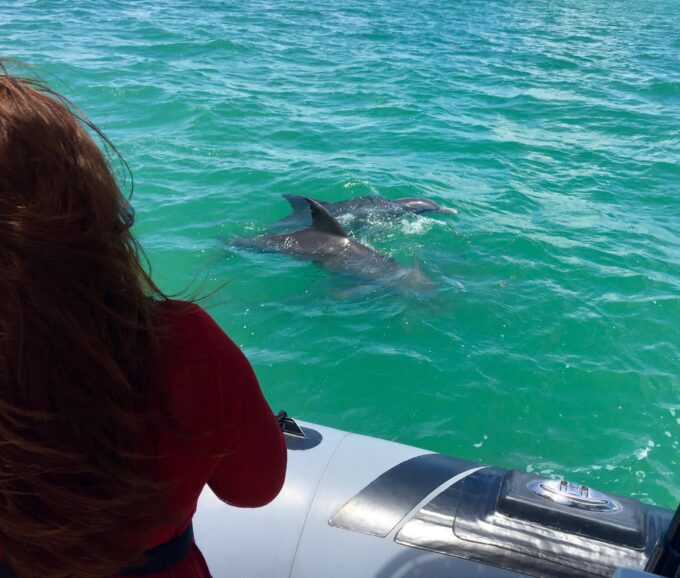 A woman visiting Miami encounters a wild dolphin during a boat tour in Miami.