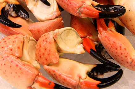Captain Kim's insider tips on where to get fresh Florida Stone Crabs.